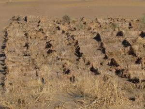 Slamenné zátarasy proti piesku