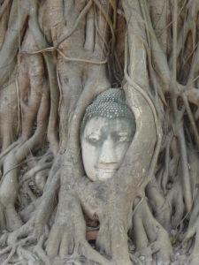 Socha Budhu vrastená do koreňov stromu