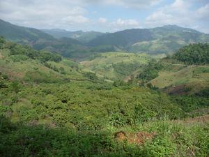 Oblasť Mae Salong je hornatá, ale zároveň krásne zelená