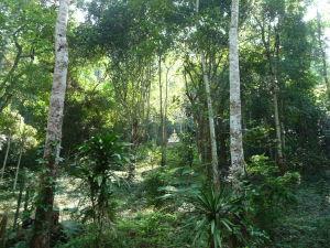 Džungľa - Zlatý Budha skrytý medzi stromami