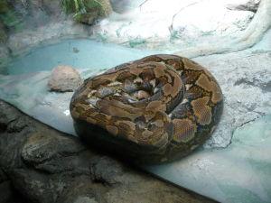 Hadík