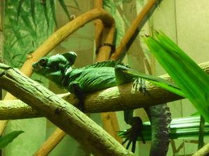 Chameleónik