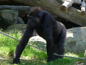 Najde sa tu aj nejaké to africké zvieratko