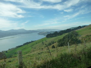 Záliv Otago Harbour
