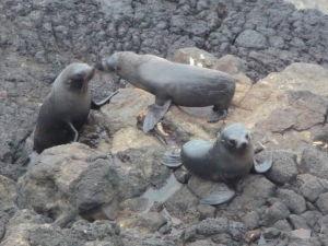 Tulene sa hrajú na skalách