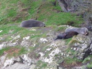 Tulene odpočívajú na skalách