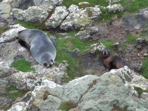 Tulene na skalách