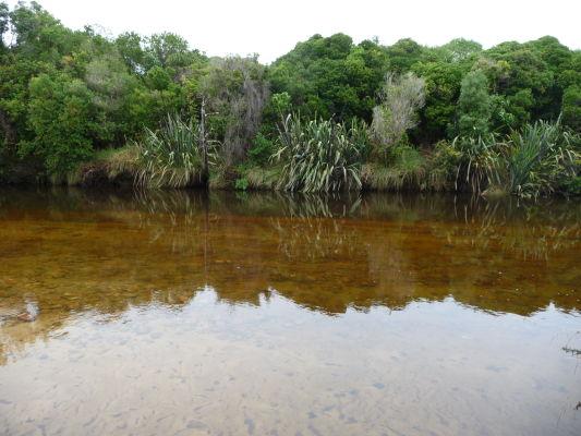 Abel Tasman NP na Novom Zélande - Občas príroda trochu pripomína tú našu