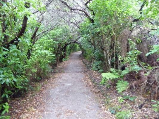 Abel Tasman NP na Novom Zélande - Vstup do parku, zahalený vo vegetácii