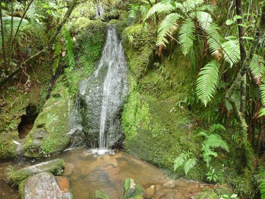 Abel Tasman NP - Bujná vegetácia v parku zahŕňa i typické novozélandské paparade