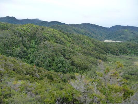 Abel Tasman NP - Zelené kopce národného parku