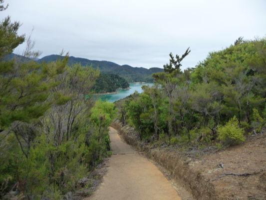 Abel Tasman NP - Cestička vedúca k zálivu a pláži Anchorage