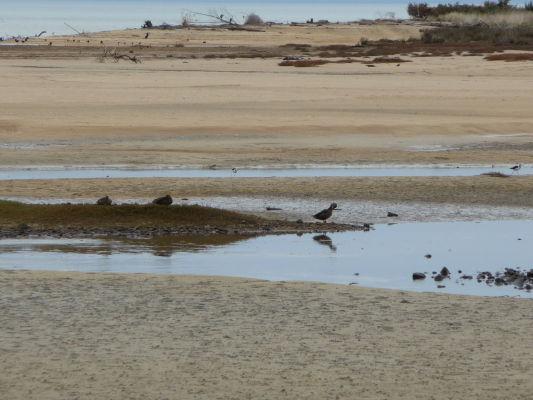 Vtáky obľubujú bahno v národnom parku Abela Tasmana