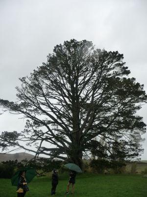 Strom, pod ktorým mal Bilbo príhovor