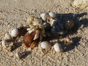 Pláž pri Black Rock - Krabí realitný trh - Výmena menších za väčšie