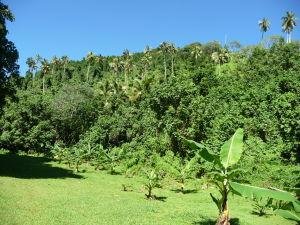 Palmové a banánovníkové háje