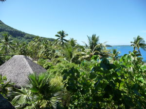 Hotel skrytý medzi palmami