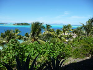 Pohľad z hotela skrytého medzi palmami