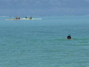 Na Bora Bora sa dajú prevádzkovať prakticky všetky vodné športy... možno okrem surfovania, keďže more je tu pokojné a nie sú tu žiadne vlny