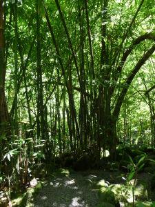 Faarumai - Tri vodopády - Cesta k prvému