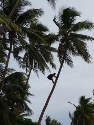 Šplhanie na palmu
