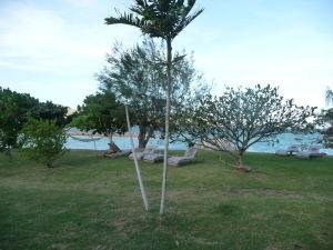 Ostrov Tavewa