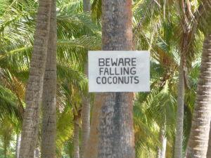 Kokosová pláž na Tavewe - Pozor na padajúce kokosové orechy!