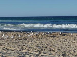 Gold Coast - Pláž a čajky