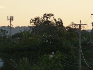 Gold Coast - Pre mňa najlepší zážitok dňa - asi to nie je dobre vidieť, ale ten strom je plný divo žijúcich papagájov kakadu