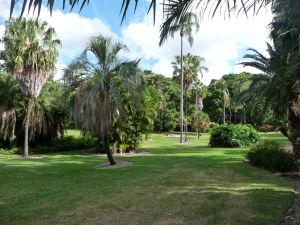 Brisbanská botanická záhrada