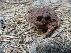 Táto žaba celkom ochotne pózovala