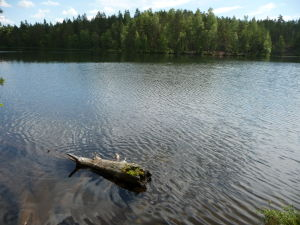 Jedno z jazier v parku Nuuksio