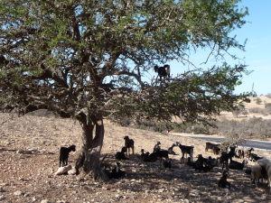 Strom a kozy