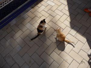 Essaouira - v Maroku sú mačky všade
