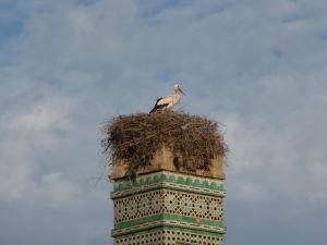 Minaret obývajú tiež bociany