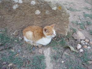 A Šelah obývajú i mačky