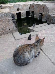 Jazierko uprostred Šelahu, obývané rybamy a jeho okolie mačkami