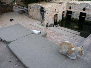 Mačiek je v Maroku všade kopec