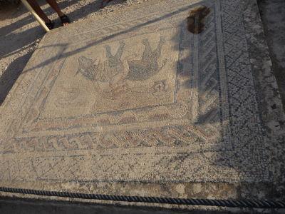 Mozaika vo Volubilise