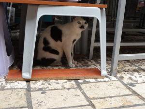 Na tržnici sa skrývalo i prevtelenie jedného malého chlapíka do mačky
