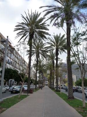 Palmová alej na Rabinovom námestí