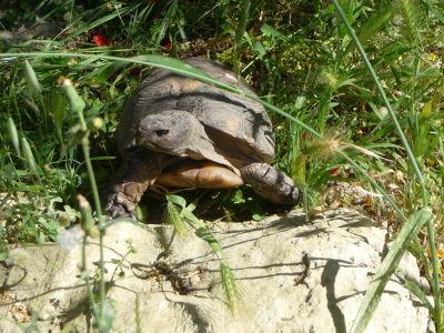 Aj tu nájdeme korytnačky