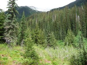Začiatok treku prechádza lesom