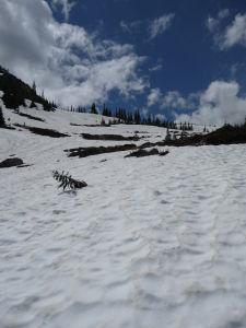 Sneh...