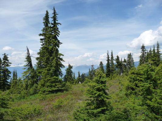 Začiatok treku k jazierkam Elfin Lakes v Provinčnom parku Garibaldi v Britskej Kolumbii v Kanade veľmi rýchlo prejde do riedkeho lesa, vďaka čomu sa otvoria dobré výhľady na okolie