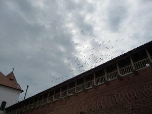 Hrad Mir majú v obľube holuby