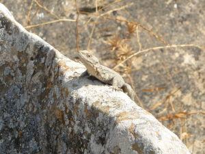 Národný park Gobustan - Dnešní obyvatelia parku