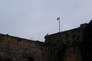 Do hradu je zakázaný vstup psom... zrejme preto sa tu usídlili mačky