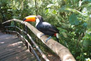 Priateľský tukan