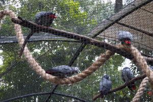 Papagáje žako - najinteligentnejšie papagáje vôbec, až sa nechce veriť, že prišli z Afriky